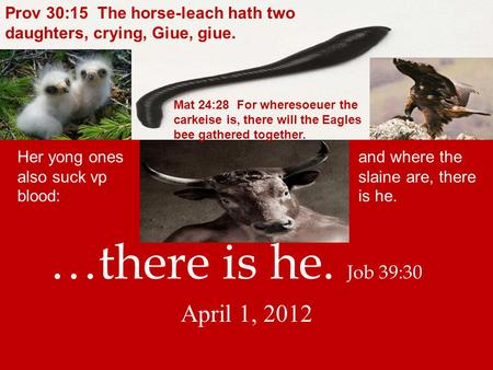 …there is he. Job 39:30 April 1, 2012 Her yong ones also suck vp blood: and where the slaine are, there is he. Prov 30:15 The horse-leach hath two daughters,
