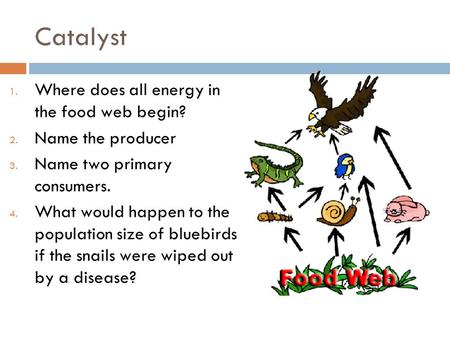 Catalyst 1. Where does all energy in the food web begin? 2. Name the producer 3. Name two primary consumers. 4. What would happen to the population size.