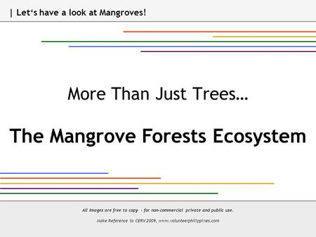 More Than Just Trees… The Mangrove Forests Ecosystem All Images are free to copy - for non-commercial private and public use. Make Reference to CERV 2009,