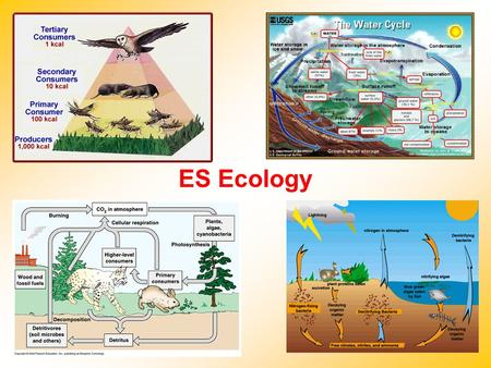 ES Ecology. Abiotic Factors Nonliving factors in an environment Examples: –Air currents –Temperature –Moisture –Light –Soil Biotic Factors Biosphere –