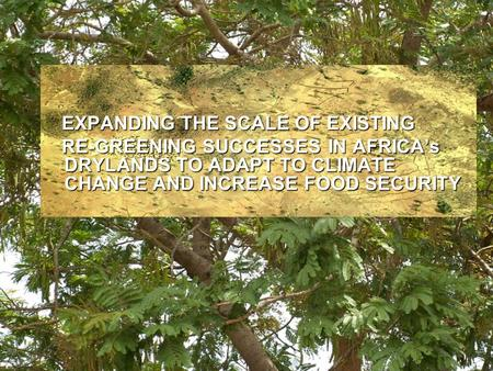 EXPANDING THE SCALE OF EXISTING EXPANDING THE SCALE OF EXISTING RE-GREENING SUCCESSES IN AFRICA's DRYLANDS TO ADAPT TO CLIMATE CHANGE AND INCREASE FOOD.