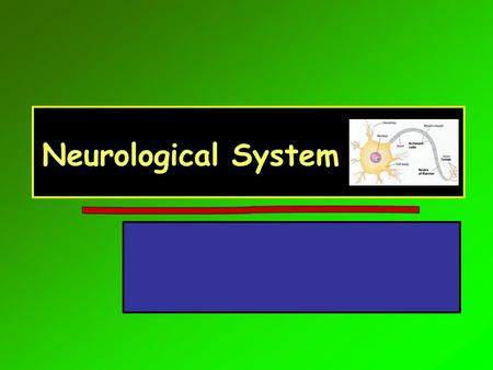 Neurological System. Symptom Overview HeadacheHeadache Dizziness and vertigoDizziness and vertigo ConfusionConfusion Memory/mental status changesMemory/mental.