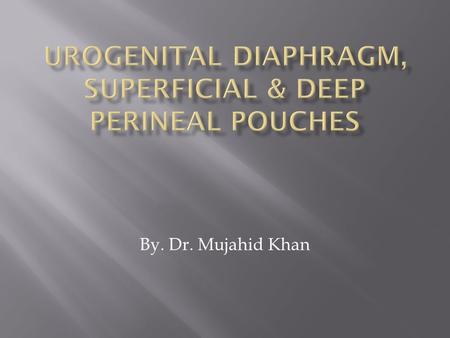 By. Dr. Mujahid Khan.  It is a triangular musculofascial diaphragm  Situated in the anterior part of the perineum  Filling in the gap of the pubic.