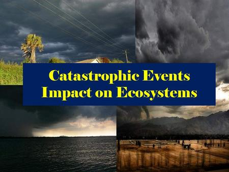 Catastrophic Events Impact on Ecosystems. Tornadoes.