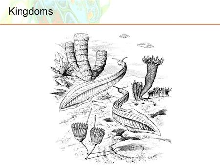 Kingdoms. Basic Branches of Life  More than 200 years ago, Linnaeus began with only the Plant and Animal Kingdoms.  Later Kingdoms Protista, Fungi,