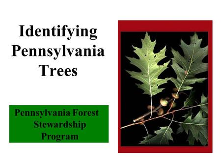 Pennsylvania Forest Stewardship Program Identifying Pennsylvania Trees.