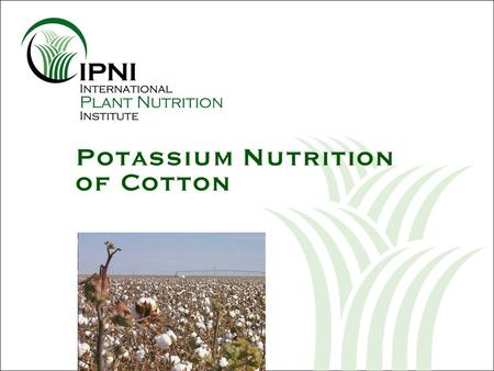 Potassium Nutrition of Cotton. Outline – K Nutrition of Cotton U.S. cotton yields since 1975 Growth and development of the cotton plant Nutrient uptake.