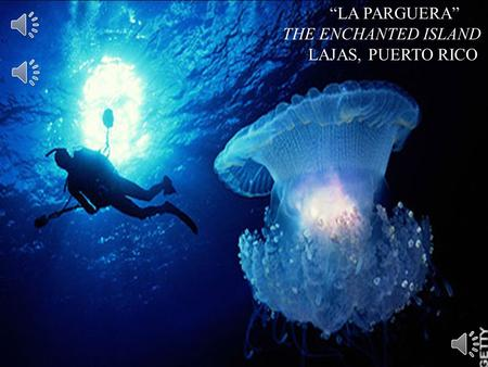 """Diamond in the Rough"" ""LA PARGUERA"" THE ENCHANTED ISLAND"