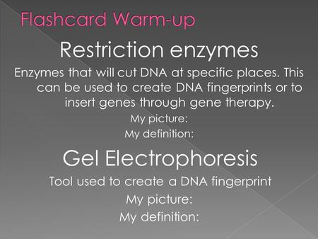 Restriction enzymes Enzymes that will cut DNA at specific places. This can be used to create DNA fingerprints or to insert genes through gene therapy.