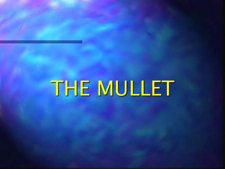 THE MULLET DEFINITION Mullet (mulit): a hairstyle, common among those of lower socio-economic status, consisting of short, well groomed hair on the anterior.
