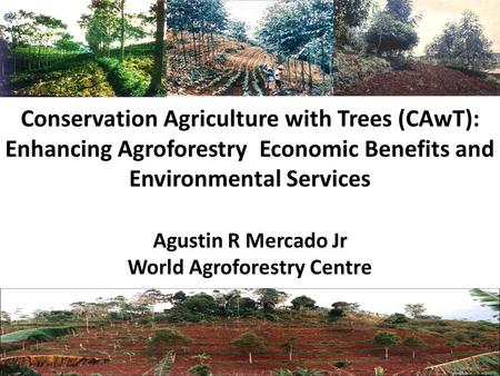 Conservation Agriculture with Trees (CAwT): Enhancing Agroforestry Economic Benefits and Environmental Services Agustin R Mercado Jr World Agroforestry.