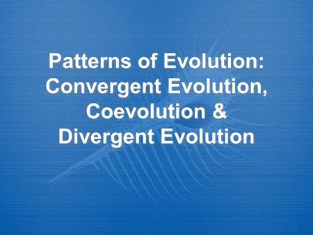 Convergent Evolution Occurs when different organisms that live in similar environments become more alike in appearance and behaviour. The environment selects.