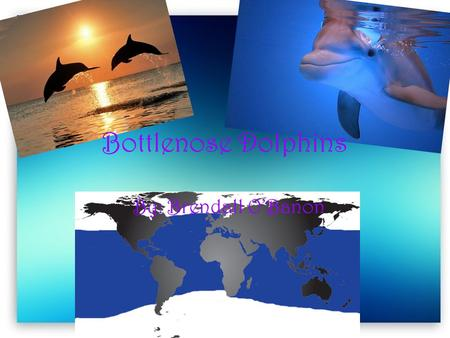 Bottlenose Dolphins By: Brendall O'Banon. Learned Behaviors Learns how squeak, whistle, and click Play with humans.