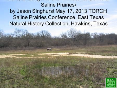 Rare, Endangered and Threatened plants of Saline Prairies\ by Jason Singhurst May 17, 2013 TORCH Saline Prairies Conference, East Texas Natural History.