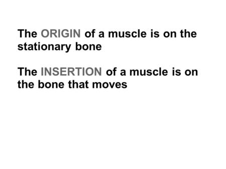 The ORIGIN of a muscle is on the stationary bone