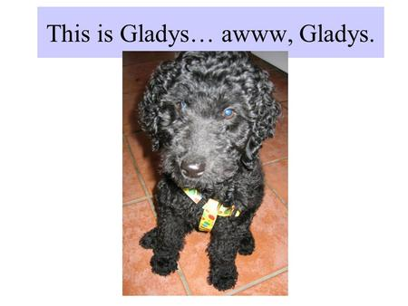 This is Gladys… awww, Gladys.. Here are some of her siblings! Lil' Darling Larry Jethro Hoss.