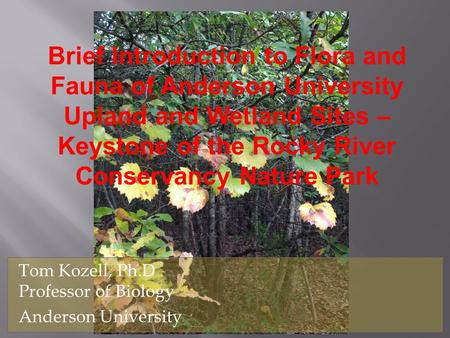 Brief Introduction to Flora and Fauna of Anderson University Upland and Wetland Sites – Keystone of the Rocky River Conservancy Nature Park Tom Kozell,