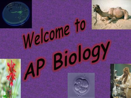 Welcome to AP Biology We will meet every B Day – 6 th hour  Good way to contact me – by.