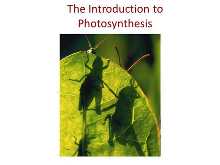 The Introduction to Photosynthesis. IB Assessment Statement State that photosynthesis involves the conversion of light energy into chemical energy.