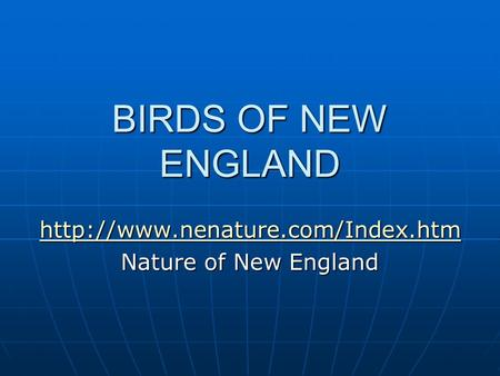 BIRDS OF NEW ENGLAND  Nature of New England.