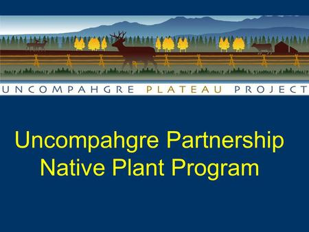 Uncompahgre Partnership Native Plant Program Landscape Scale Collaboration & Restoration in Western Colorado.