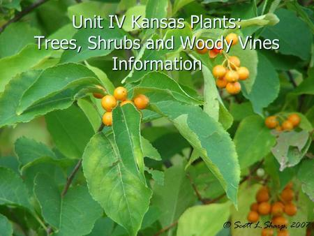 Unit IV Kansas Plants: Trees, Shrubs and Woody Vines Information.