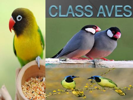 What are birds ?  Birds(class Aves) are feathered, winged, bipedal, endothermic (warm- blooded), egg-laying, vertebrate animals. With around 10,000 living.
