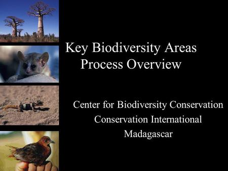 Key Biodiversity Areas Process Overview Center for Biodiversity Conservation Conservation International Madagascar.