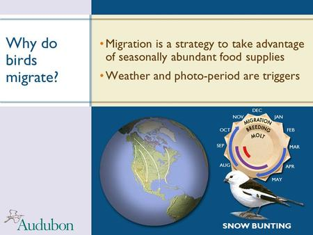 Why do birds migrate? Migration is a strategy to take advantage of seasonally abundant food supplies Weather and photo-period are triggers SNOW BUNTING.
