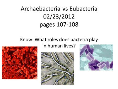 Archaebacteria vs Eubacteria 02/23/2012 pages 107-108 Know: What roles does bacteria play in human lives?