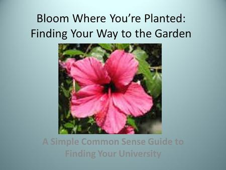Bloom Where You're Planted: Finding Your Way to the Garden A Simple Common Sense Guide to Finding Your University.