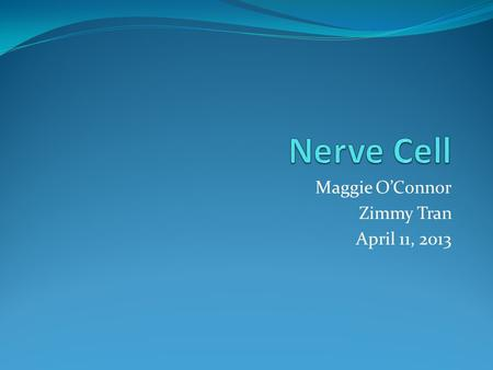 Maggie O'Connor Zimmy Tran April 11, 2013. Nerve Cell Neuron Composed of billions of neurons The main portion is called the soma or cell body 1 Cell body.