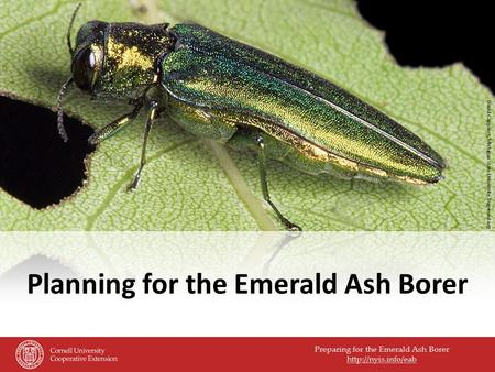 Preparing for the Emerald Ash Borer  Planning for the Emerald Ash Borer David Cappaert, Michigan State University, bugwood.org.