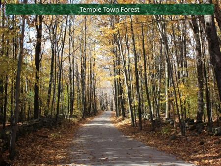 Temple Town Forest. Presented by: Temple Conservation Commission (TCC) Significant contributions and extracts from: Eric Foley (TCC member), Temple Town.