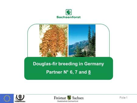 Douglas-fir breeding in Germany Partner N° 6, 7 and 8 Staatsbetrieb Sachsenforst Folie 1.