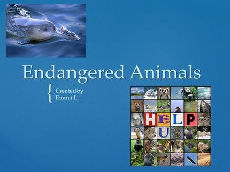 { Endangered Animals Created by: Emma L.. Animals need help; endangered animals need help with eight extinct animal species this century. Endangered specimens.