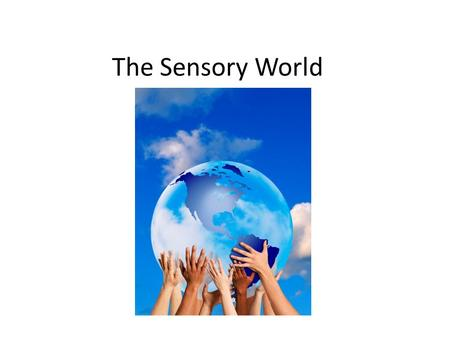 The Sensory World. Sensory Integration Take in information Process the information Respond to the information.