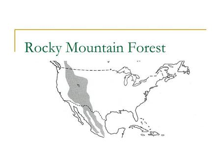 Rocky Mountain Forest. Douglas Fir (Pseudotsuga menziesii) Characterisitcs  Height: 80-200'  Diameter: 2-5'  Needles: evergreen, 2 rows,.75- 1.25'