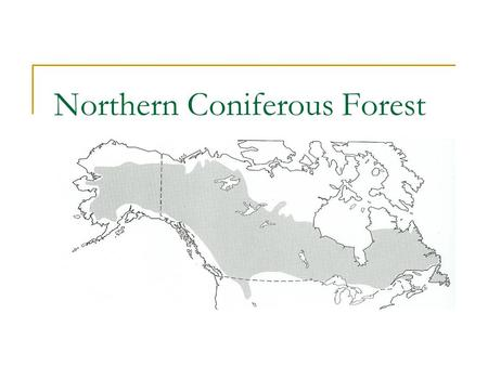 Northern Coniferous Forest. White Spruce (Picea glauca) Characteristics  Height: 40' – 100'  Diameter: 1' – 2'  Needles: evergreen, ½ - ¾'' long, blue-