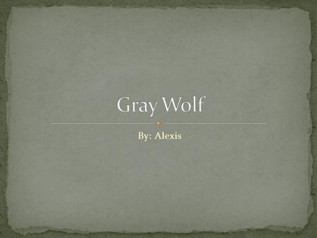 By: Alexis. The Gray Wolf is 4½ to 6½ lbs. The Gray Wolf weighs 25-59 kg. The color of the Gray Wolf is grizzled gray, black, or all white.