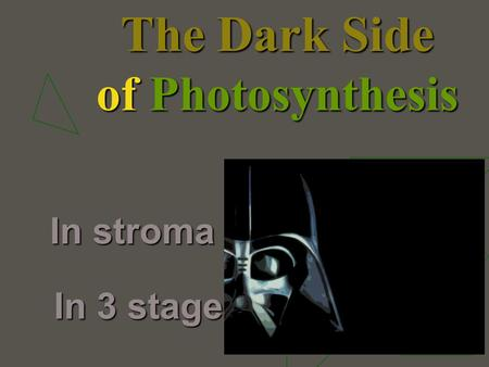 The Dark Side of Photosynthesis In stroma In 3 stages.