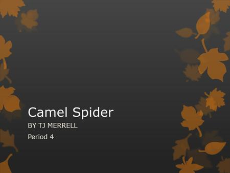 Camel Spider BY TJ MERRELL Period 4.