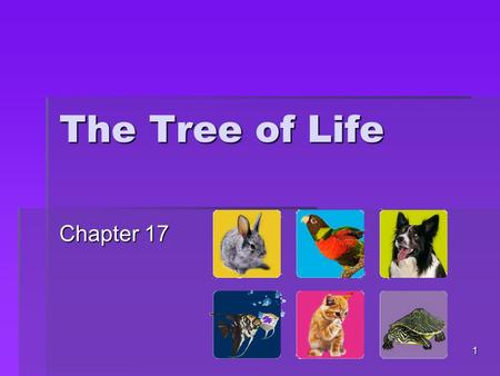 The Tree of Life Chapter 17 1. 17.1 Taxonomy  The science of naming and classifying organisms  2000 years ago – Aristotle  Grouped plants and animals.