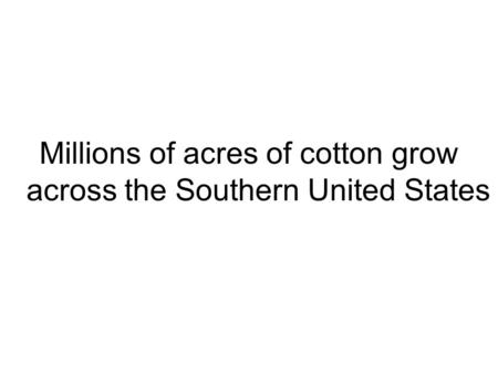 Millions of acres of cotton grow across the Southern United States.