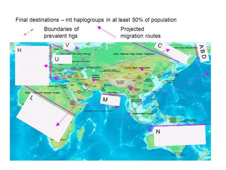 U V H L N A B D C M Final destinations – mt haplogroups in at least 50% of population Boundaries of prevalent hgs Projected migration routes.