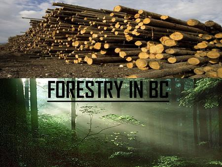 FORESTRY IN BC.  Forestry first began in Canada because we had a lot of resources and was founded by the First Nations. IMPROVEMENTS:  Better Seedling.