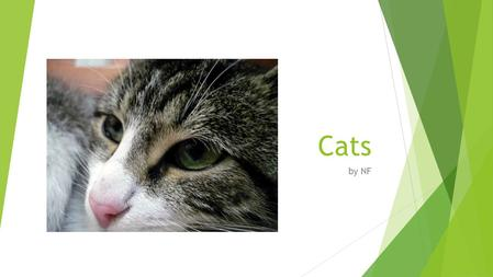 Cats by NF. Characteristics  Cats walk on their toes, like horses and dogs. When they walk, they use a pacing gait, which means they move the feet on.