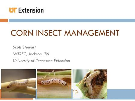 CORN INSECT MANAGEMENT Scott Stewart WTREC, Jackson, TN University of Tennessee Extension.