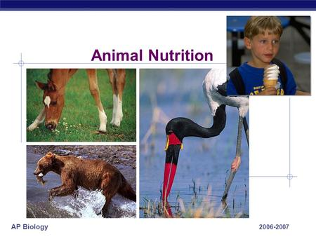 AP Biology 2006-2007 Animal Nutrition AP Biology What do animals need to live? O2O2 food ATP  Animals make energy using:  food  oxygen  Animals build.