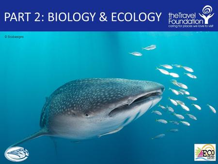 PART 2: BIOLOGY & ECOLOGY © Scubasigns. PART 2: BIOLOGY & ECOLOGY Outline 1. Taxonomy and Classification What type of animal is a it? 2. Distribution.